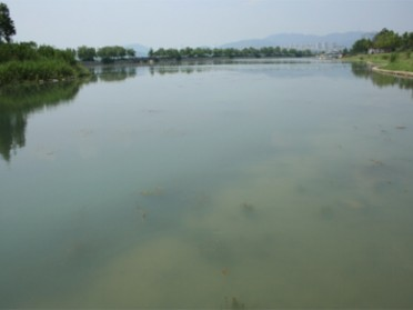 水生植物恢复技术