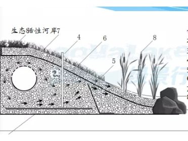 生态活性水岸技术